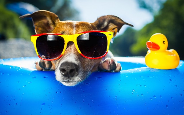 Hot-summer-day-fancy-dog-with-sunglasses-at-the-pool_5120x3200